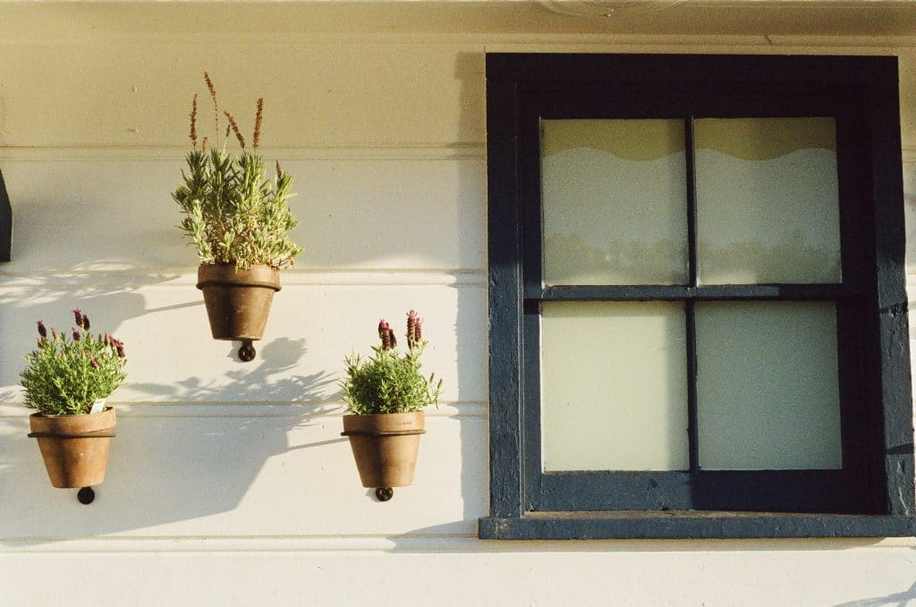 Plants and Glass Window